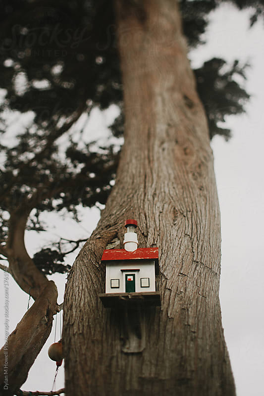Birdhouse by Dylan M Howell Photography for Stocksy United