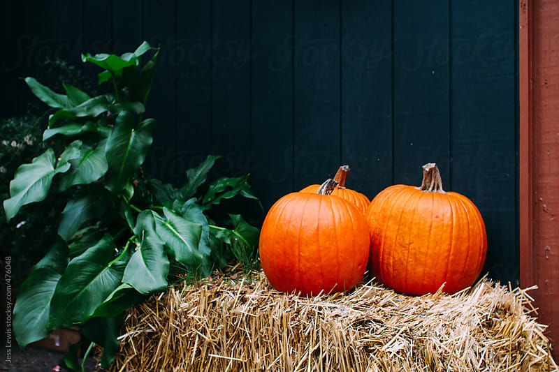 trio of pumpkins on hay bale by Jess Lewis for Stocksy United