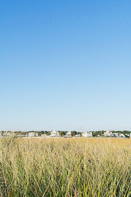 Beach grass with blurred houses in distance. Cape Cod. by Kristin Duvall for Stocksy United