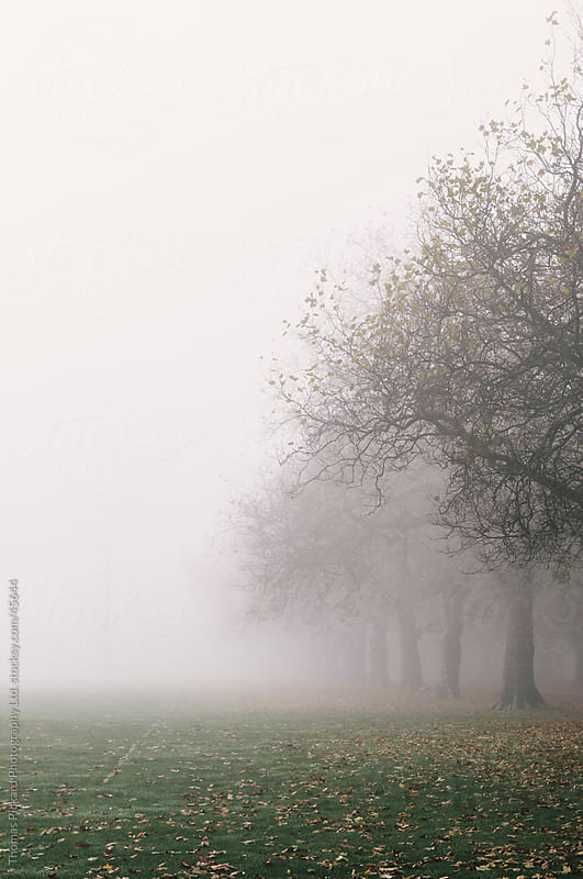Trees, park and early morning fog, Christchurch New Zealand. by Thomas Pickard for Stocksy United