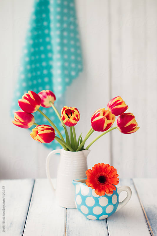 Tulips and gerbera arranged in jugs by Ruth Black for Stocksy United