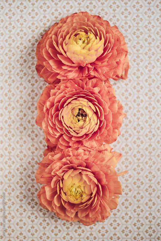 Three orange buttercups by Vera Lair for Stocksy United