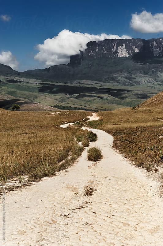 View from way to Roraima - Venezuela, South America by Gabriel Diaz for Stocksy United