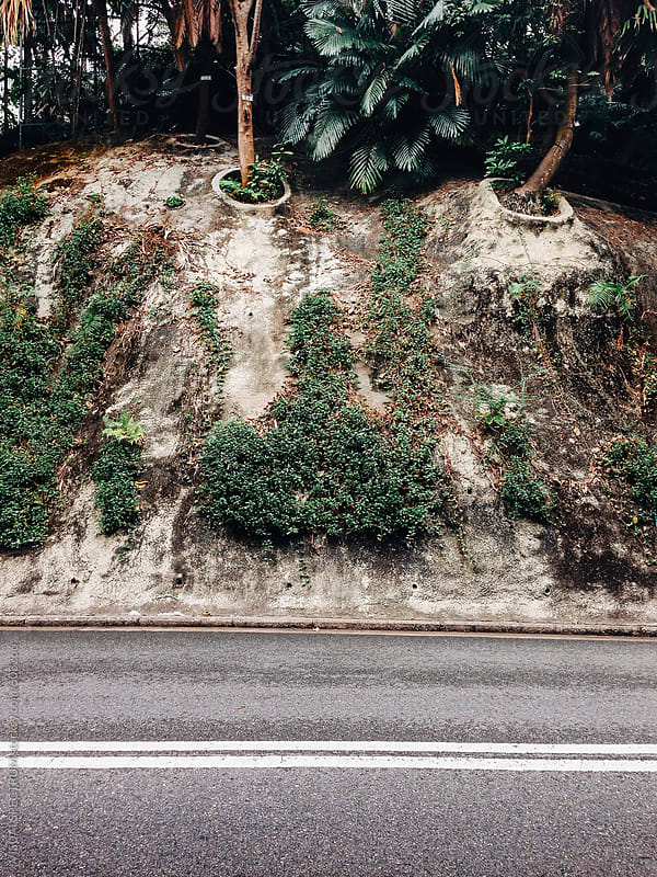 Green Plants Growing in Urban Environment by VISUALSPECTRUM for Stocksy United