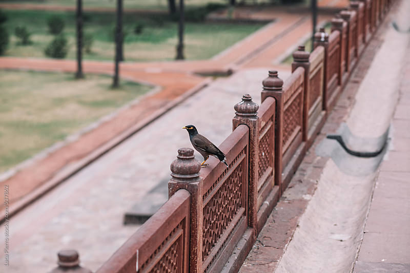 Details of Humayun's Tomb, New Delhi, India by Luca Pierro for Stocksy United