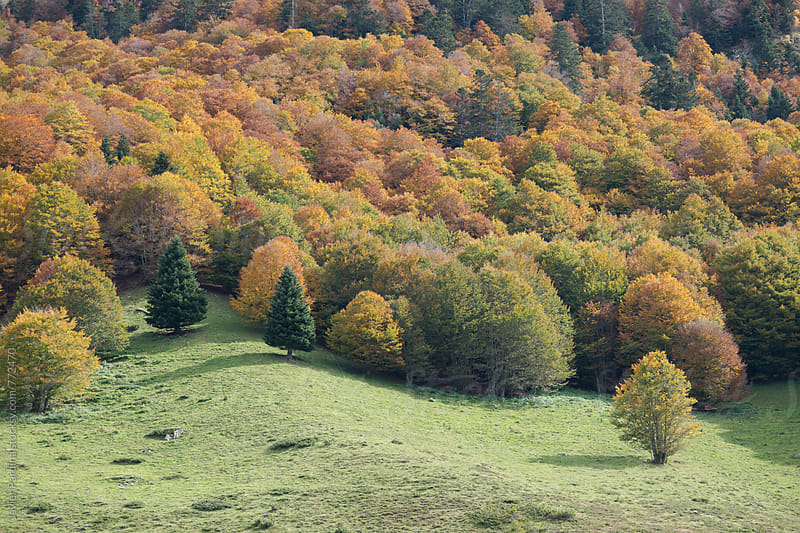 part of mountains with the autumn forest by Javier Pardina for Stocksy United