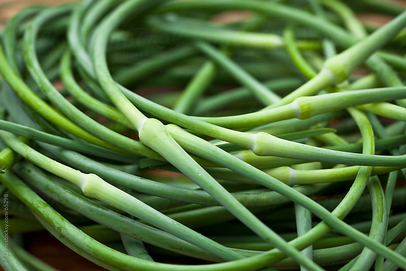 Fresh Picked Garlic Scapes by Jill Chen for Stocksy United