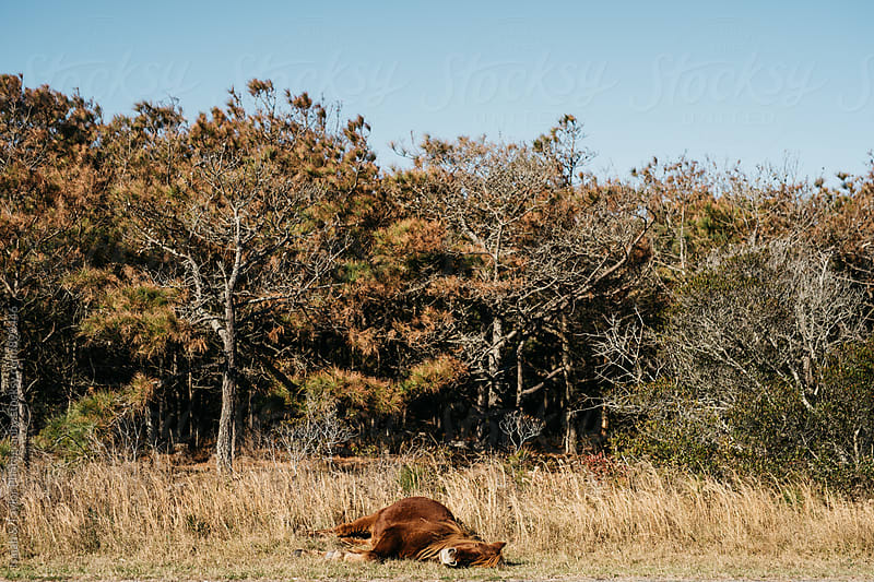 Horse Laying in Nature by Isaiah & Taylor Photography for Stocksy United