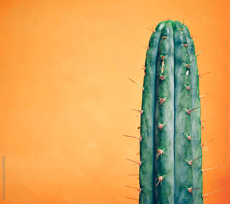 San Pedro cactus against bright orange wall by Wizemark for Stocksy United