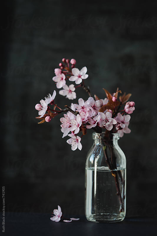 Cherry blossom in a jar by Ruth Black for Stocksy United
