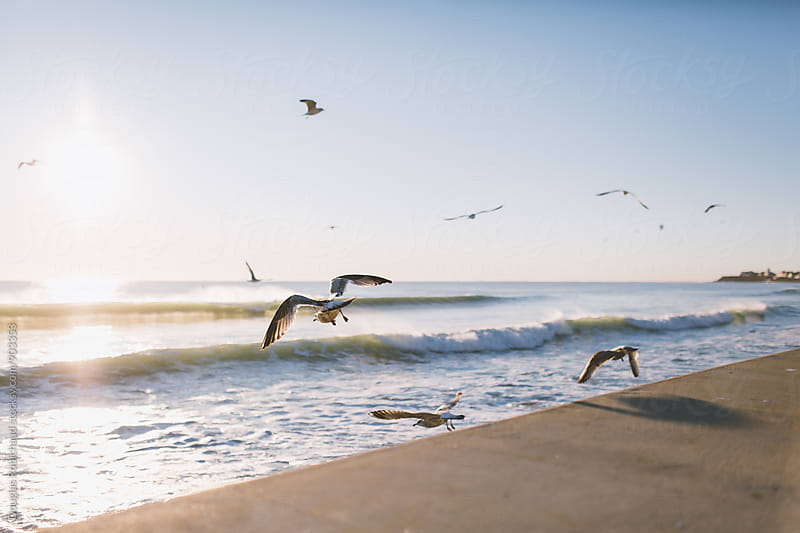 Flock of Seagulls flying at the beach by Douglas Robichaud for Stocksy United
