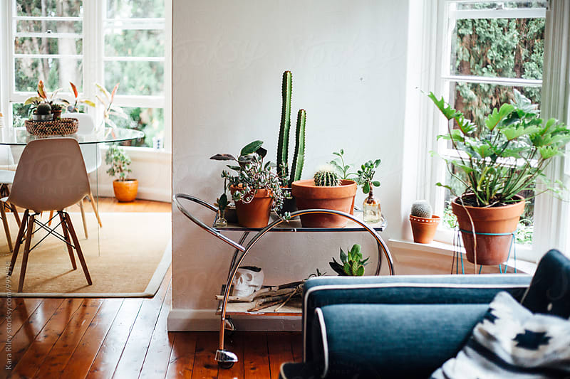 Apartment Interior with Houseplants by Kara Riley for Stocksy United