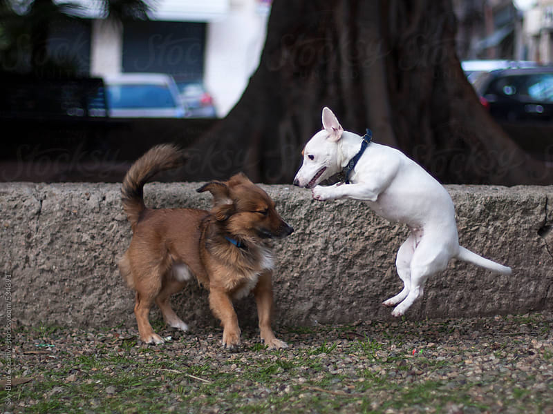 Two dogs playing in a public park by Luca Pierro for Stocksy United