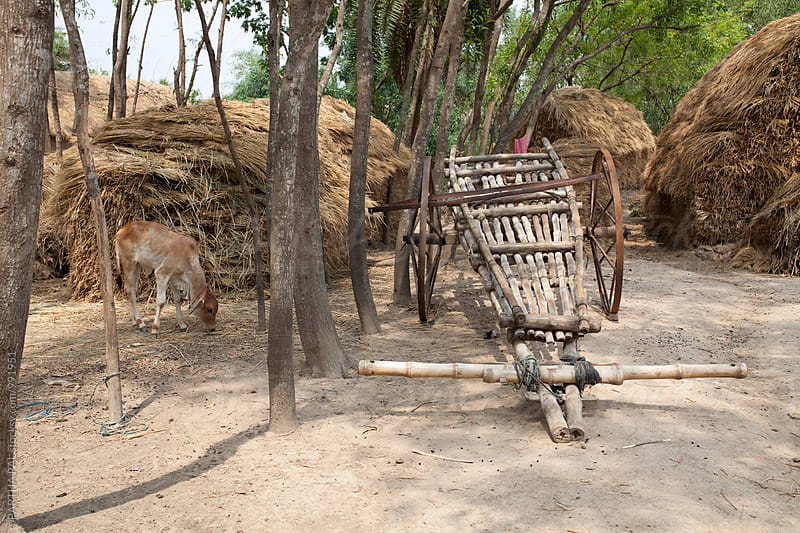 Utility cart at Rural India by PARTHA PAL for Stocksy United