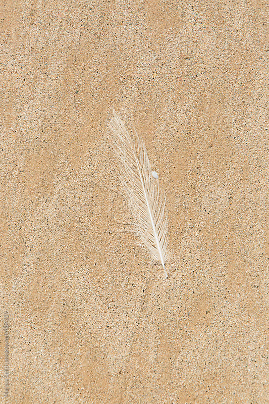 A white feather against clean sand on a beach  by Maresa Smith for Stocksy United