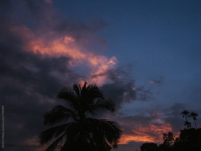 Sunset clouds above palm tree by Martin Matej for Stocksy United
