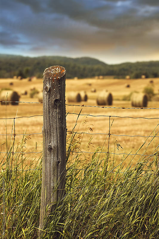 Fence in tall grass with bales of hay in background by Sandra Cunningham for Stocksy United