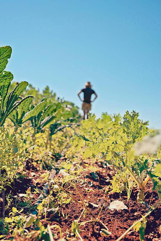 organic farming by Gillian Vann for Stocksy United