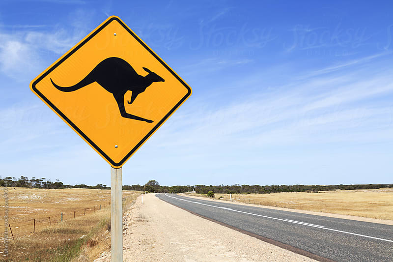 Kangaroo warning sign. Australia. by John White for Stocksy United
