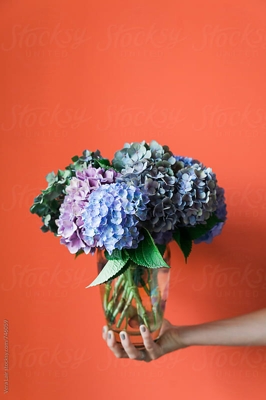 A bouquet of hydrangea by Vera Lair for Stocksy United