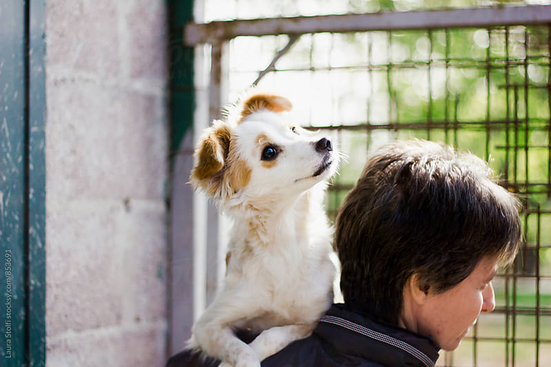 Crossbreed puppy looks at something behind woman's head by Laura Stolfi for Stocksy United
