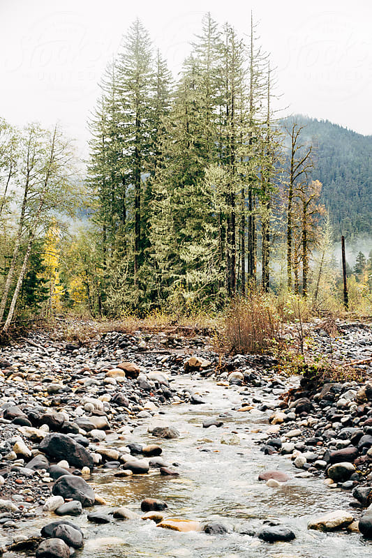 Shallow River And Stones Below Tall Pine Trees  by Luke Mattson for Stocksy United