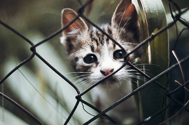 Cute baby cat behind fence in garden by Jovana Rikalo for Stocksy United