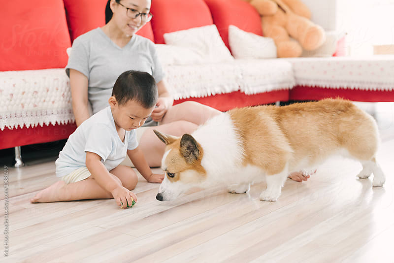 Pregnant woman and her son ,dog at home by MaaHoo Studio for Stocksy United
