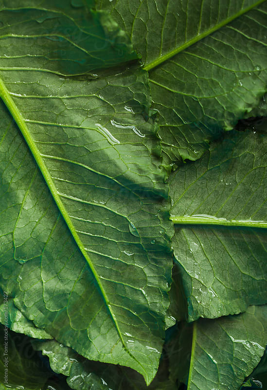 Greens by Jelena Jojic Tomic for Stocksy United