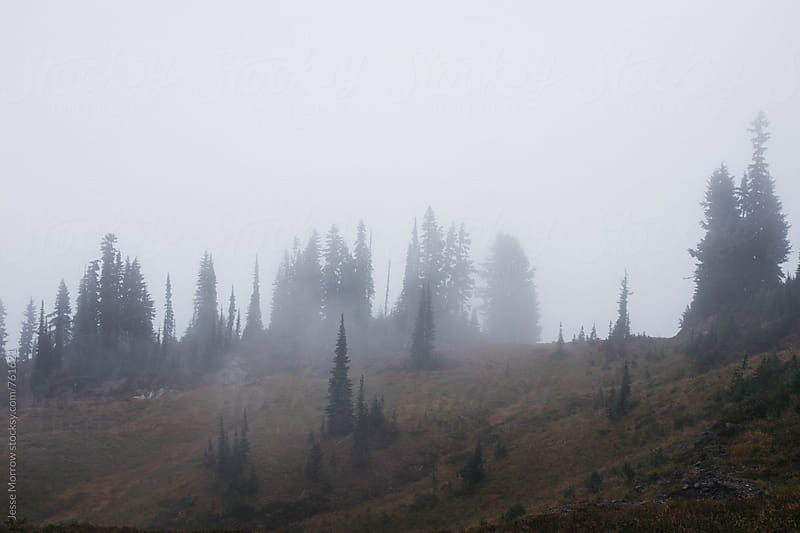 fog rising above northern pines in landscape by Jesse Morrow for Stocksy United