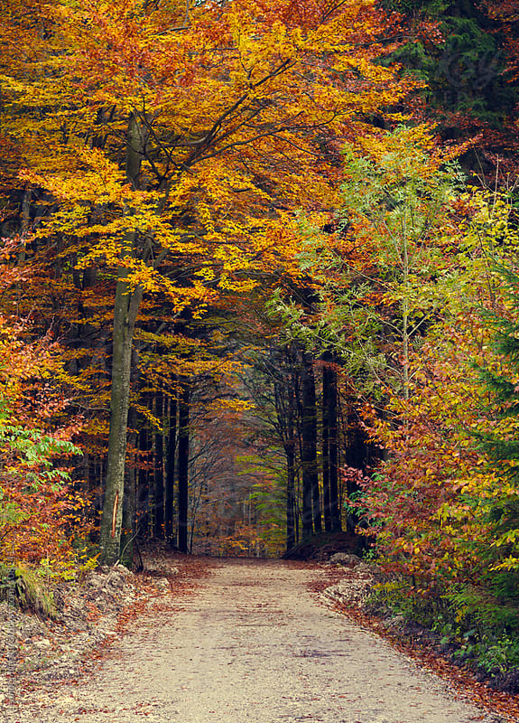 entry to a colorful forest in autumn by Leander Nardin for Stocksy United