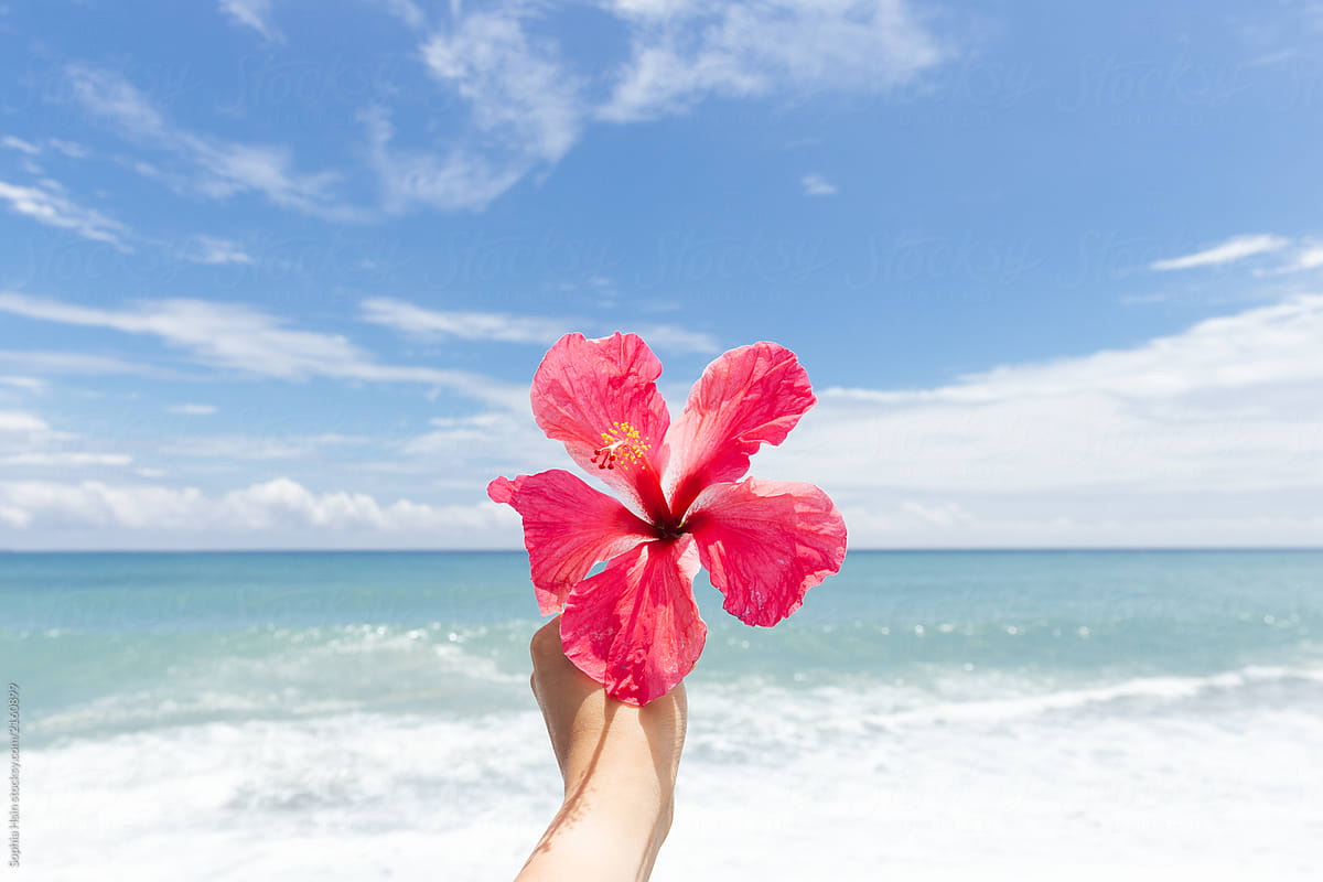 Hand Holding Hibiscus Flower Against Beach View Taiwan Stocksy United
