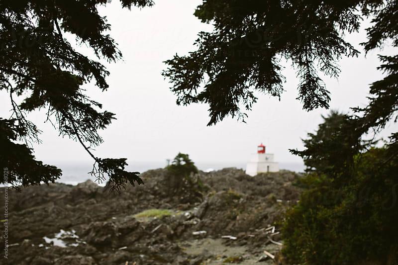 Tree limb on foggy day at shore by Andrew Cebulka for Stocksy United