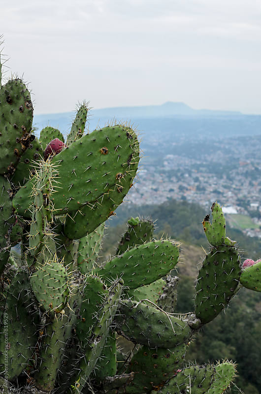 Nopal cactus closeup and Mexico-city at the background by Alice Nerr for Stocksy United