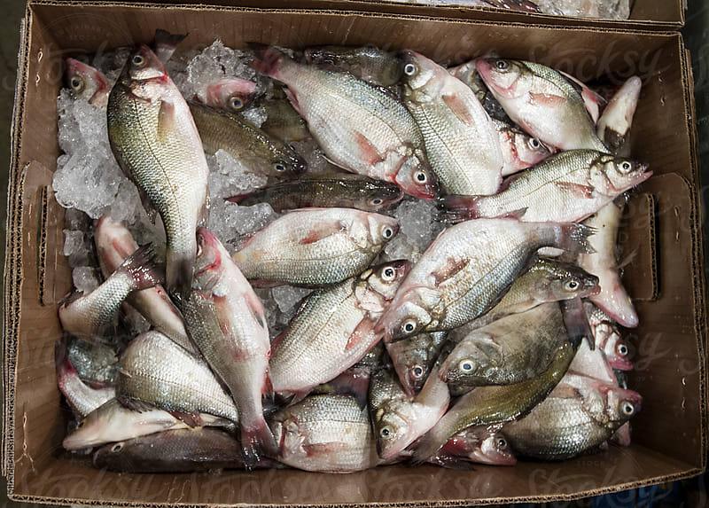 Fresh fish for sale at a fish market by Mihael Blikshteyn for Stocksy United