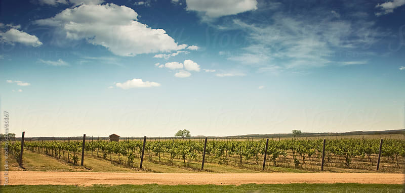 Vineyards landscape by Tod Kapke for Stocksy United