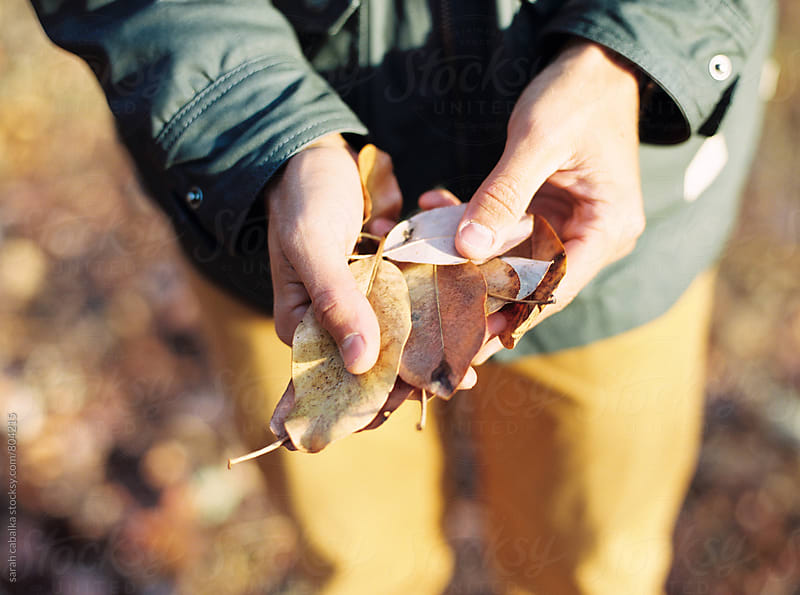 Man Holding Leaves by sarah cabalka for Stocksy United