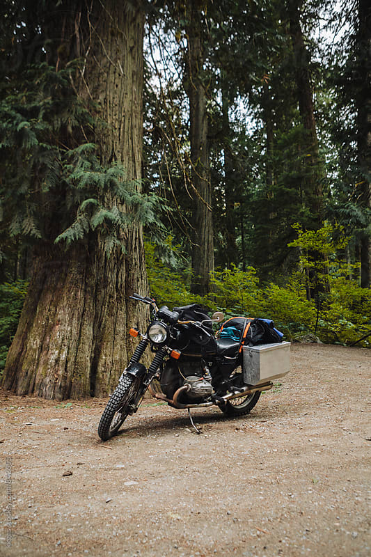 Motorbike in a clearing in a redwood forest by kkgas for Stocksy United