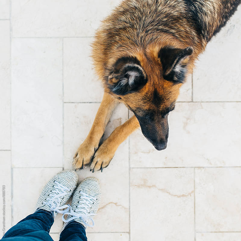 German Shepherd paws + human feet by Jen Grantham for Stocksy United