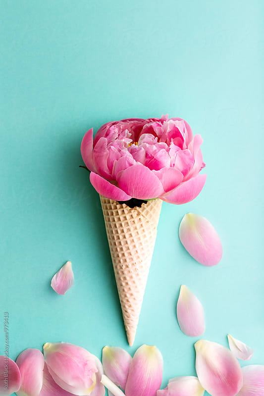 Peony rose in a wafer ice cream cone by Ruth Black for Stocksy United