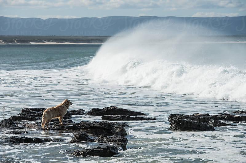 Dog at Shoreline by craig ferguson for Stocksy United