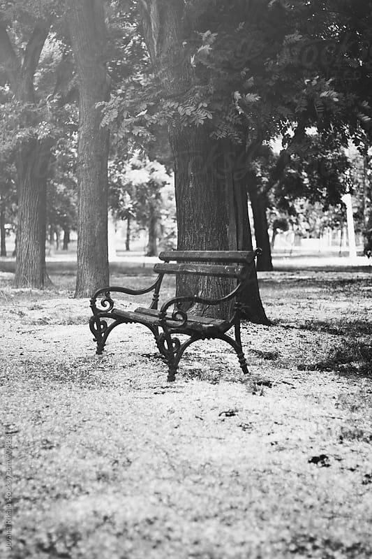 Bench in park by Jovana Rikalo for Stocksy United