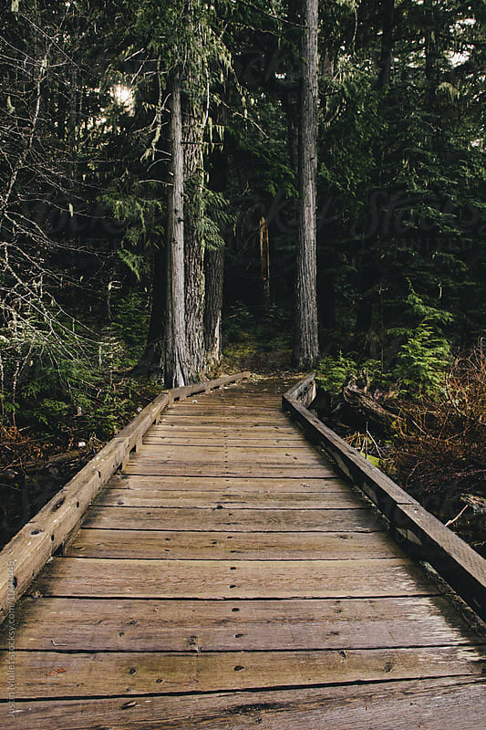 Boardwalk along hiking trail by Justin Mullet for Stocksy United