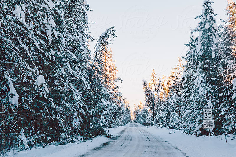 Sunrise over a snowy rural road surrounded with pine trees by Justin Mullet for Stocksy United