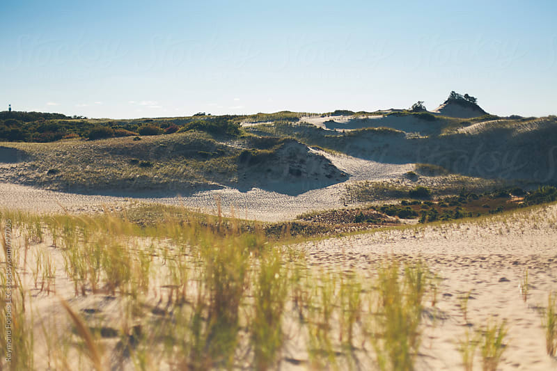 Dunes at Provincetown, Cape Cod Massachusetts by Raymond Forbes LLC for Stocksy United