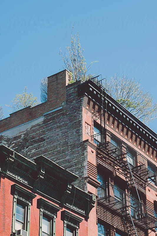 Apartment buildings in New York City by Lauren Naefe for Stocksy United