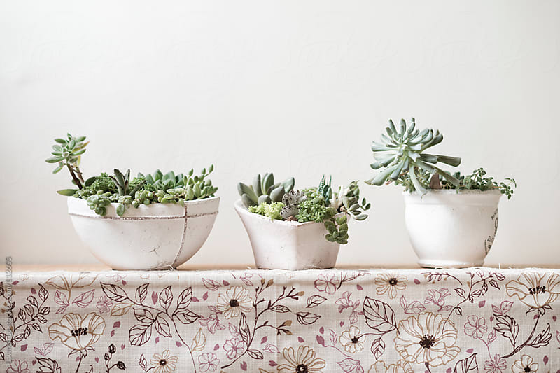 Small potted plants on case in home  by Lawren Lu for Stocksy United