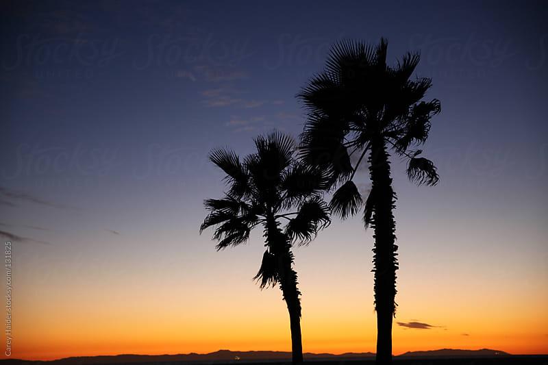 A Couple Of Palm Trees In The Sunset by Carey Haider for Stocksy United
