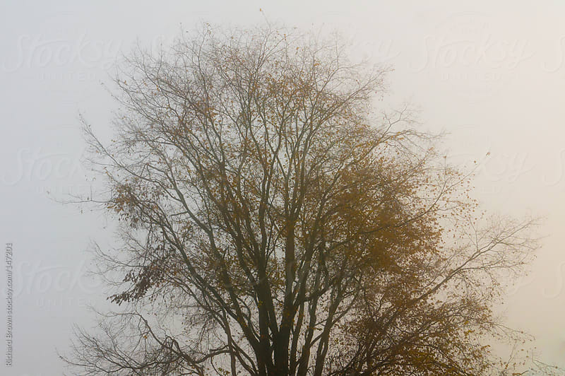 A spooky tree in the fog by Richard Brown for Stocksy United