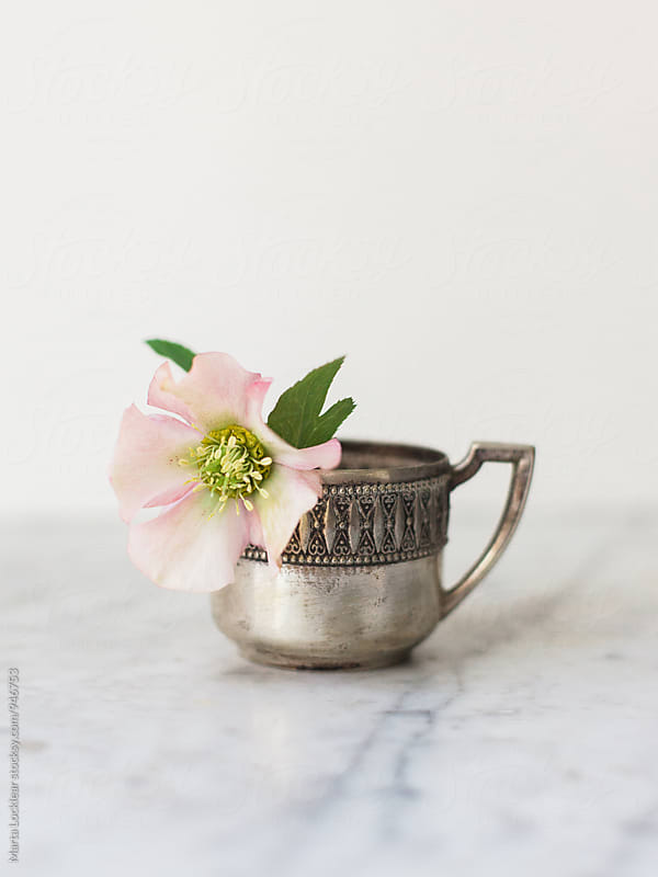 Hellebores in a silver cup by Marta Locklear for Stocksy United